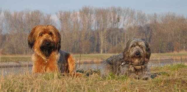 Tiergestützte Therapie mit Hunden